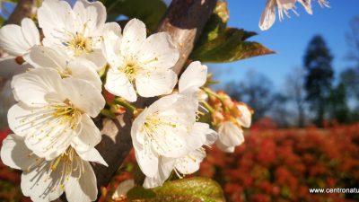 Buona Pasqua con Centro Natura